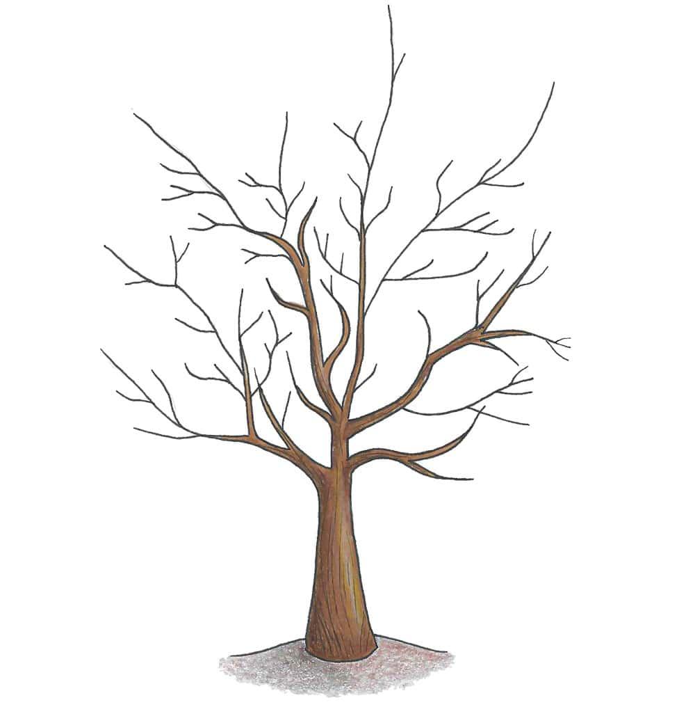 Gestutzter Apfelbaum (Illustration)